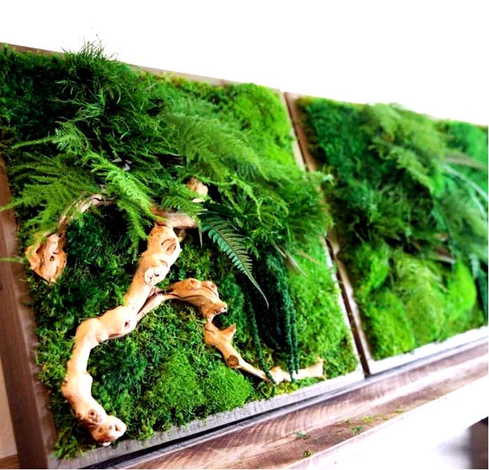 10 причин иметь стабилизированные растения в своем доме